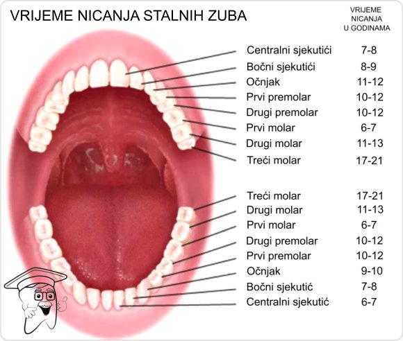stalni zubi11